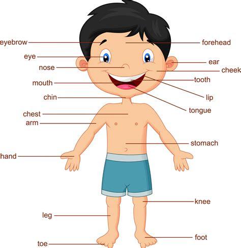 imagenes en ingles de las partes del cuerpo el cuerpo humano en ingl 233 s vocabulario gu 237 a estudio 2018