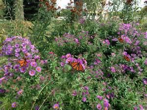 Home Garden Design Videos Butterfly Garden