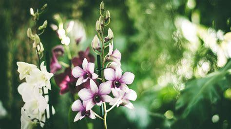 pflanze mit großen blättern die 52 besten hintergrundbilder der natur blumen und