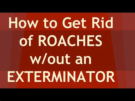 how to get rid of cockroaches in kitchen cabinets how to