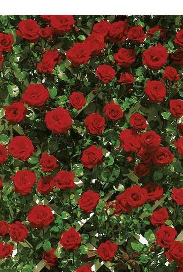 Garten Blumen Kaufen 867 pflanzen kaufen bei obi