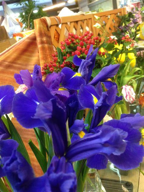 il fiore iris il fiore di oggi iris e il significato fiore