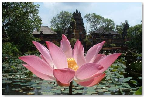 island of lotus eaters land of the lotus eaters odyssey