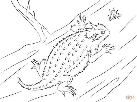 desert lizard coloring pages texas horned lizard coloring page free printable