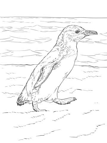 galapagos penguin coloring page little blue penguin walks coloring page free printable