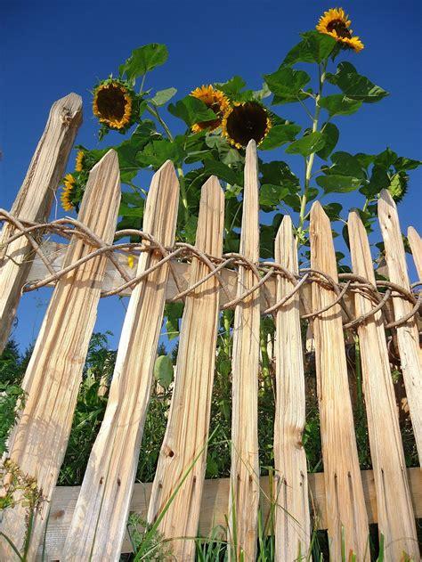commercio trento legno trentino il sito ufficiale della di