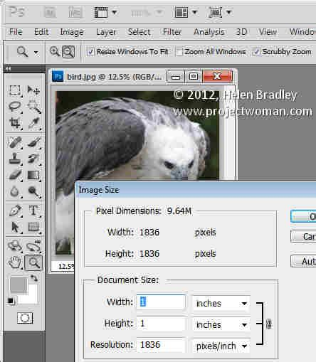 reset crop tool photoshop crop to fixed ratio in photoshop 171 projectwoman com