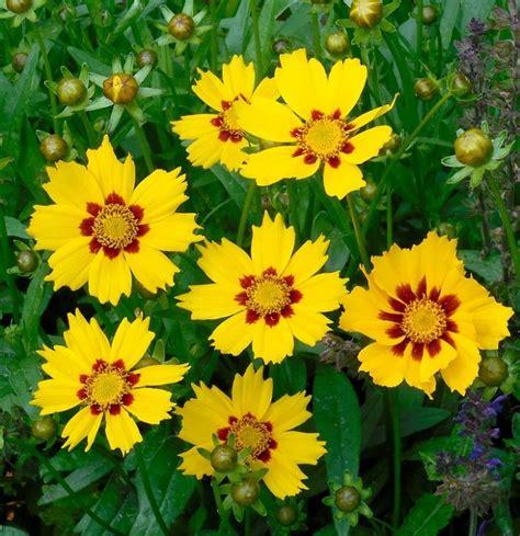 fiori gialli nomi fiori gialli i pi 249 belli per luce al giardino