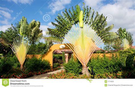 bei giardini bei giardini tropicali fotografie stock immagine 7774223
