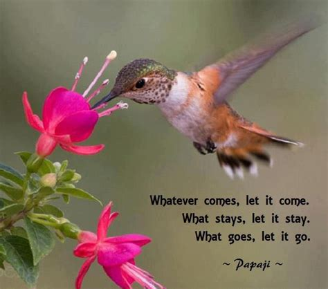 quotes about beauty and hummingbirds quotesgram