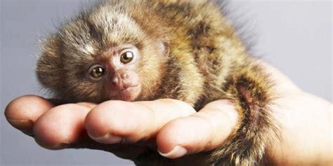imagenes de animales pequeños los 10 animales m 225 s peque 241 os del mundo notas la biogu 237 a