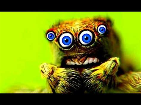 imagenes raras de animales los 10 insectos m 193 s raros del mundo youtube