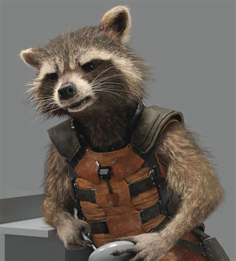 marvel film with raccoon rocket raccoon marvel universe entp entps the clever