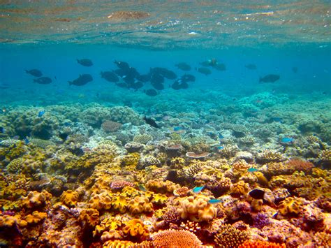 Finding Great Finding Nemo The Great Barrier Reef Queensland Australia 11 Real Places That