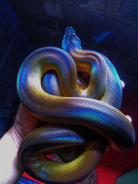 rare snake    net