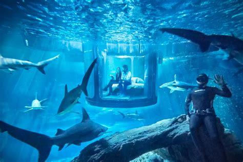 underwater bedroom shark aquarium underwater bedroom hiconsumption