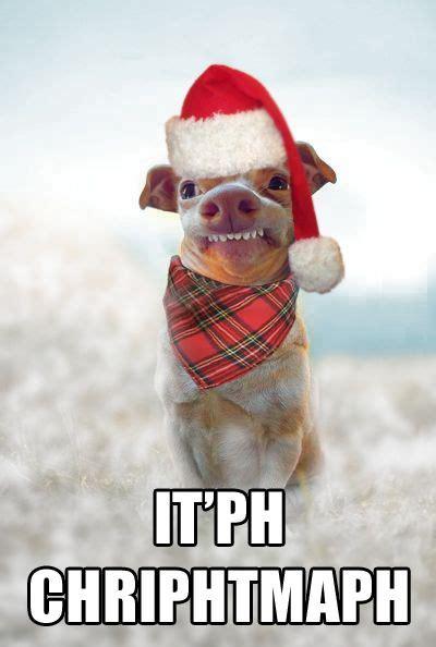 Christmas Card Meme - phteven tuna the dog image gallery tuna the doors and ph
