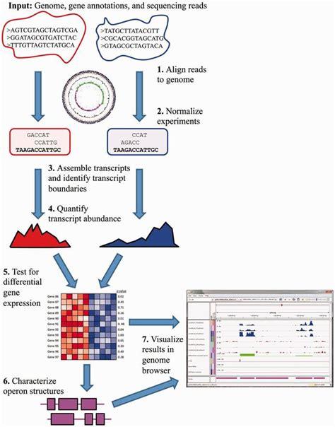 rnaseq workflow rockhopper for computational analysis of bacterial rna