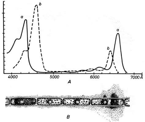 lade spettro solare les chloroplastes
