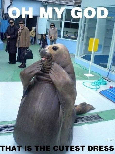 Gay Seal Meme Generator - oh my god that is the cutest dress seal weknowmemes
