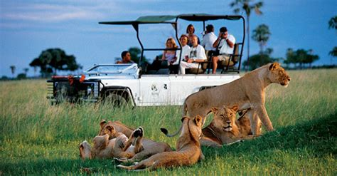 Safitri Syari 8 days kenya and tanzania classic safari
