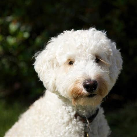 names for white dogs white names 100 best names for white dogs