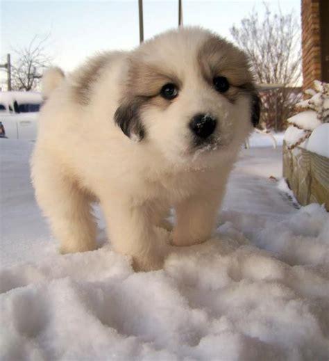 fuzzy puppies snow puppy fuzzy today