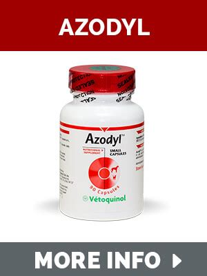 supplement kidney damage renadyl kidney supplement