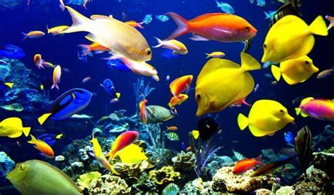 imagenes animales de mar animales de mar todo sobre los animales marinos