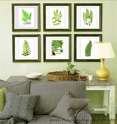 fern decor set of 6 botanical fern antique prints reproduction wall