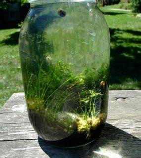 aquarium   giant glass jar ideas happening