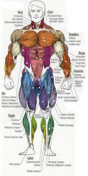 Group 15 Periodic Table Name Dr Will Mccarthy S Science Site Major Muscles Of The Body