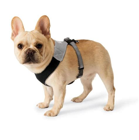 dog comfort harness comfort dog harness dog milk