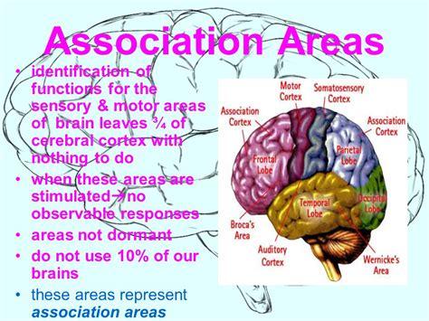 motor association area motor association cortex function impremedia net