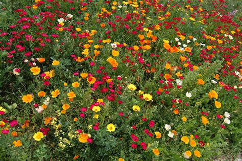 Garden City Flowers Flowers Garden City Panoramio Photo Of Flower Garden Of Matsuzaki City Flowers Garden City
