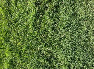 couch grass varieties the various types of couch turf rivers edge turf