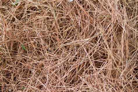 pine needles in compost are pine needles bad for compost