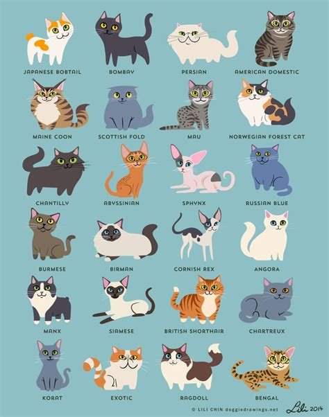 types of cats best 25 kinds of cats ideas on