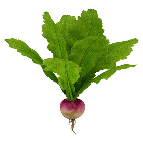 vegetables 3d max turnip vegetable modeled 3d max