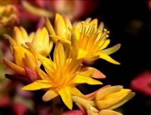 sognare fiori gialli roberto basilio vittorio liverino addio