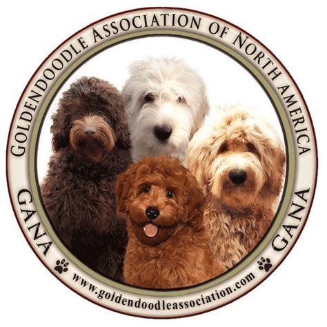 goldendoodle club of america paw print pedigrees partners