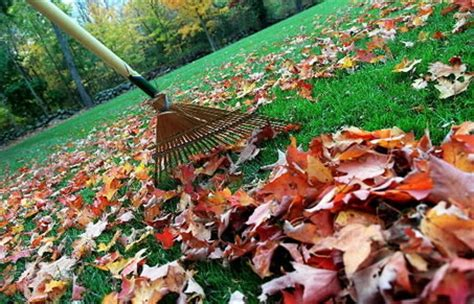 fall clean up hoxie landscaping cape cod landscaping