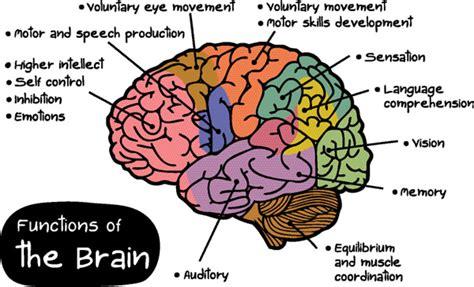 ode to the brain positiveneuro curiozitati stiati ca page 7 curiozitati stiati