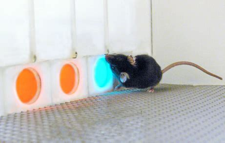 Are Mice Color Blind africa science mice get quot human quot vision in gene experiment