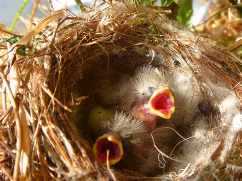what do baby house finches eat they eat their young and other thoughts on parenting