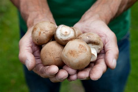 Pilze Im Garten Bestimmen by Pilze Im Eigenen Garten 187 Erhalten Beseitigen Oder Z 252 Chten