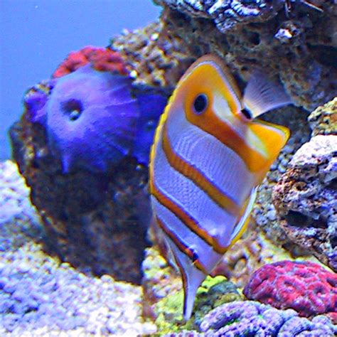 bright colored fish neon colored fish pictures to pin on pinsdaddy