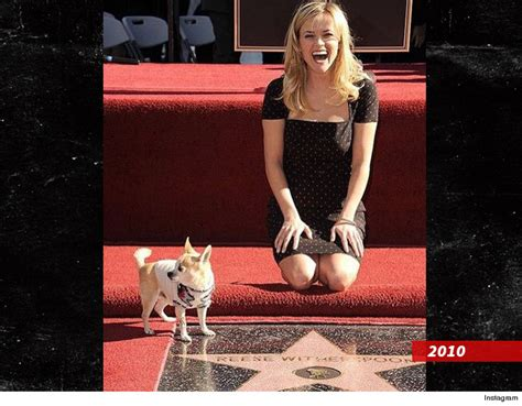 Norton To Name Purse After Reese Witherspoon by Legally Chihuahua Dies Tmz