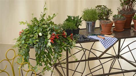 Terrasse Bepflanzen by Terrasse Bepflanzen Tolle Inspirationen Bei Westwing
