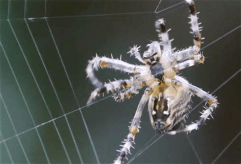 eclipsed turns out that spider does a afterall books 5 effects the solar eclipse has on animals that will